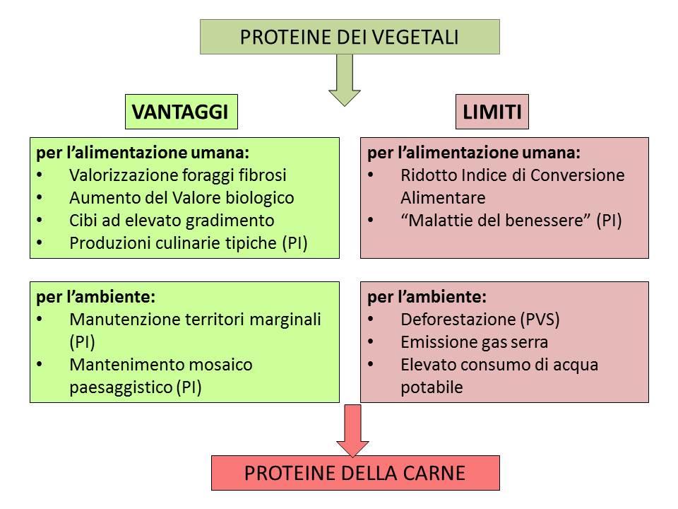 Vantaggi e limiti della trasformazione delle proteine vegetali in proteine animali