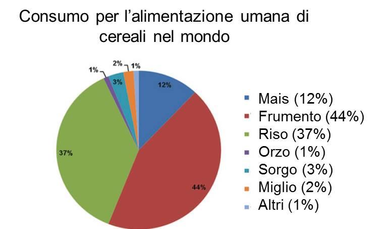 Consumo di cereali nel mondo