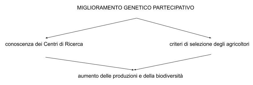 miglioramento genetico partecipativo