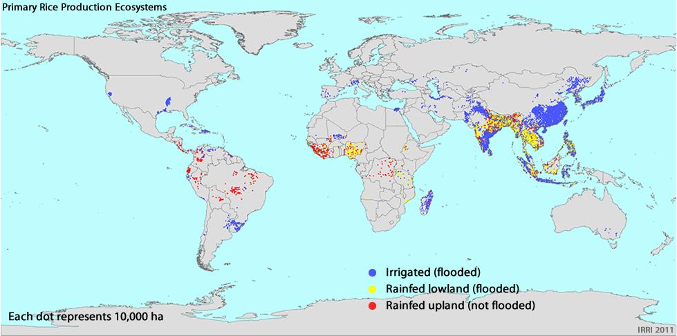 Distribuzione mondiale dei tre più diffusi sistemi di coltivazione del riso