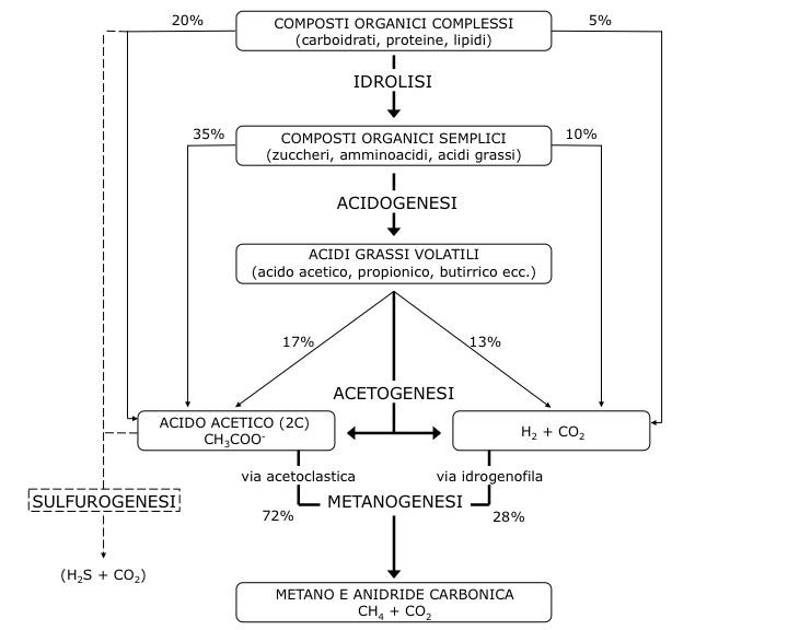 Metabolismo della digestione anaerobica